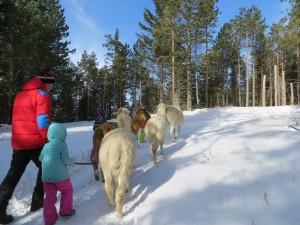 Hohe Wand - Winter Lama Wanderung