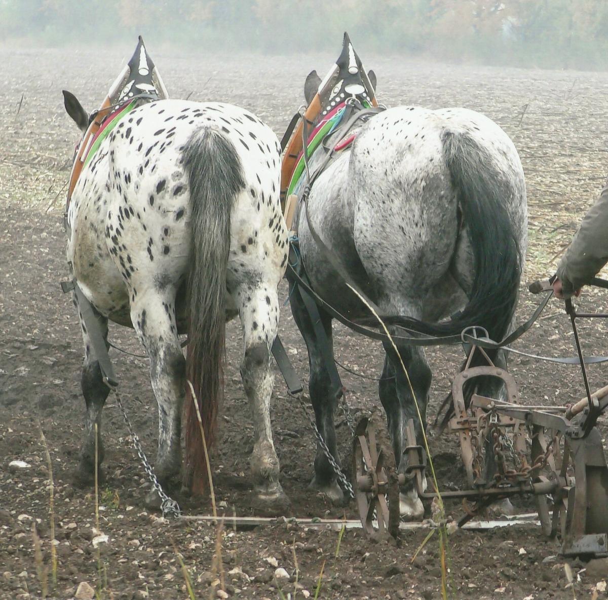 Pferdearbeiten (1)